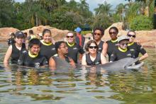 a group of transition students in the water gathered around a dolphin